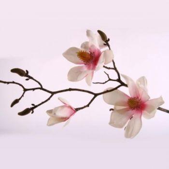 magnolienzweig deko beste bildideen zu hause design. Black Bedroom Furniture Sets. Home Design Ideas